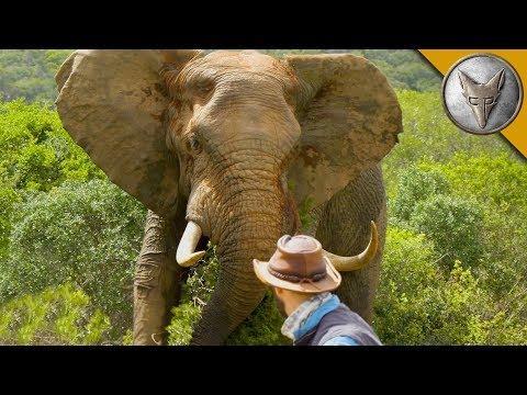 Man vs. Elephant! ( The BIG Tusker! )