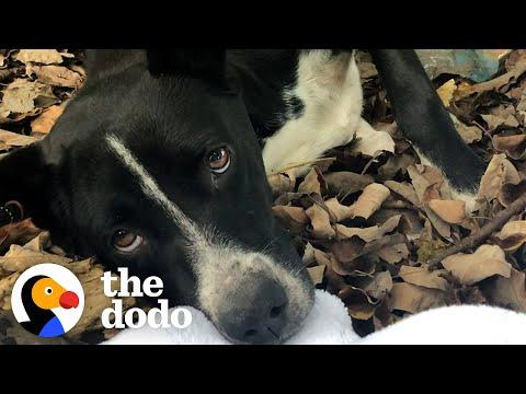 People Find A Dog And Her Puppies In The Middle Of The Woods Video