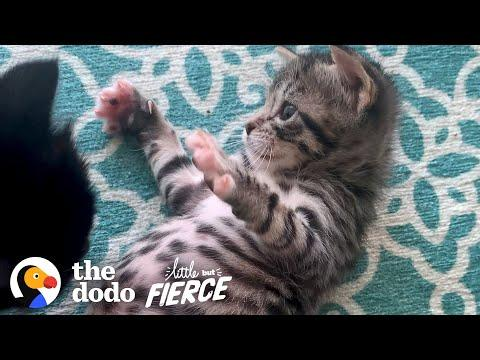 Kitten Abandoned In Box Grows Up To Be A Wild Child. Video