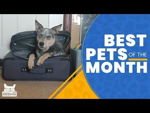 Best Pets of The Month | January 2019