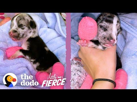 Tiniest Puppy Grows Up To Be HUGE Video