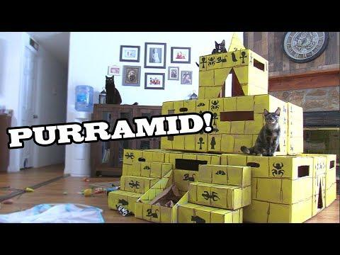 We Built a Pyramid for Our Cats - Cole and Marmalade