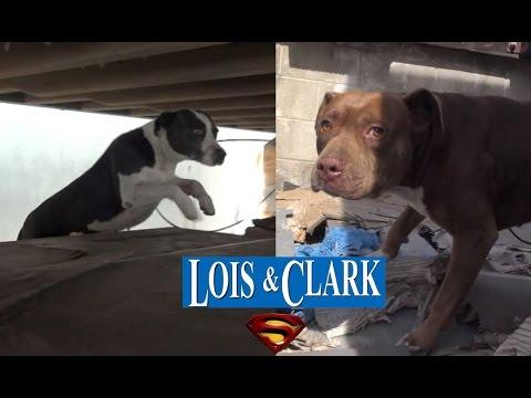Hope For Paws - Saving Lois And Clark