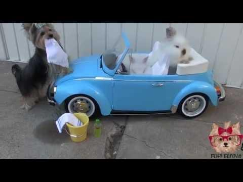 Misa Minnie Doggy Carwash