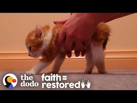 Paralyzed Kitten Decides To Beat All Odds And Walk Video