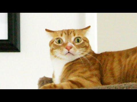 Cole And Marmalade - Understanding Your Cat's Emotions