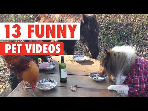 Try Not To Laugh At This Funny Pet Videos Compilation 2017
