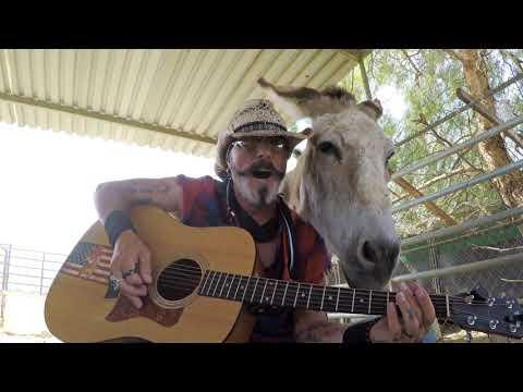 Two Donkeys Love Johnny Cash and Live Music #Video