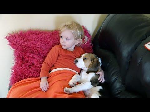 Charlie The Beagle And Laura Olivia | Movie Time