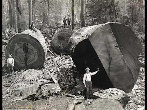 45 Vintage Photos of Lumberjacks Who Felled Big Trees in the Early 20th Century Video
