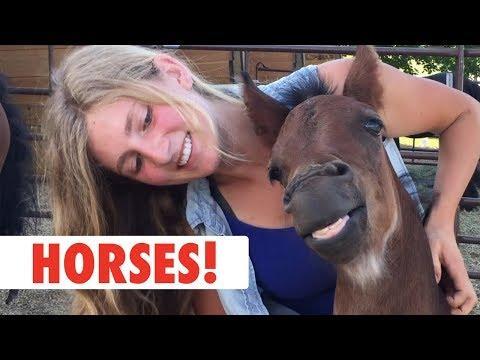 Funny Horses, Clever Horses, Happy Horses, Beautiful Horses and More...