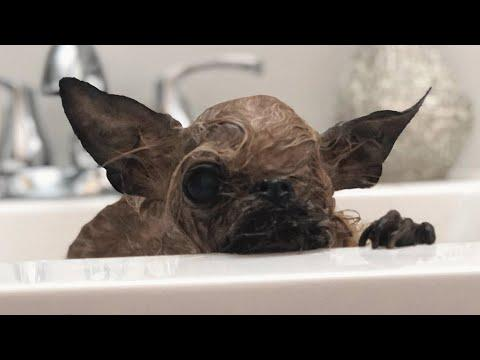This one-eyed tripod dog looks like a weird bat video