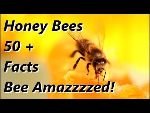 Honey Bees - Bee Amazzzed!