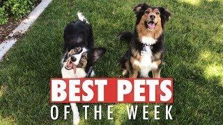 Best Pets of the Week | May 2018 Week 3