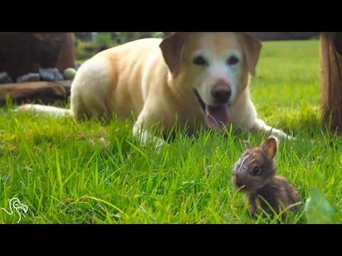 Dog Is Completely Convinced This Bunny Is A Puppy