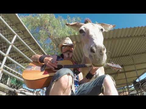 Donkey named Lilly wants to go to Space with Elton John Music. Rocket Man or Rocket Donkey #Video