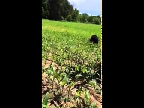 Lumberjack Rescues BLACK BEAR With Milk Can Stuck On Head
