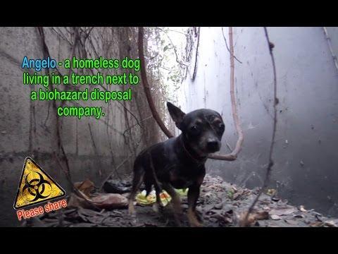 Angelo - A Homeless Dog Living Next To A Biohazard Disposal Co.