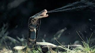 10 MOST POISONOUS ANIMALS EVER