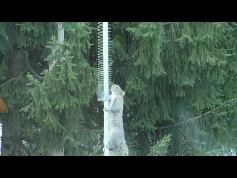 Here's Why SQUIRRELS Hate SLINKY #Video