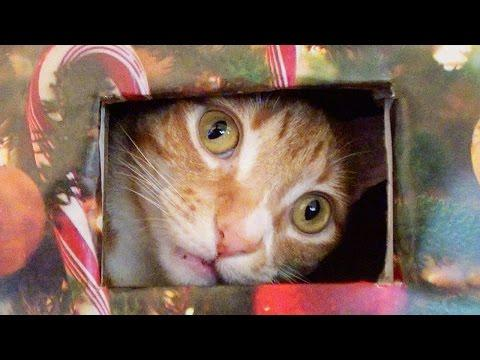 How To Make A Cat Proof Christmas Tree!