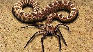 10 MOST UNUSUAL ANIMALS IN THE WORLD