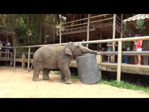 Baby Elephant Navann And His Toy