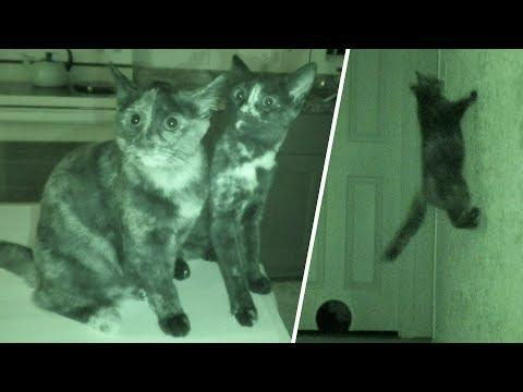 What Cats Do At Night 2