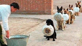 BEST TRAINED & DISCIPLINED DOGS