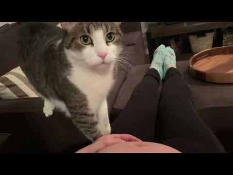 Sweet Cat Just Realized It's Human Is Pregnant! #Video