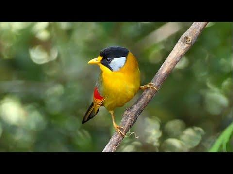 Birds of Malaysia Video: Colourful Birds
