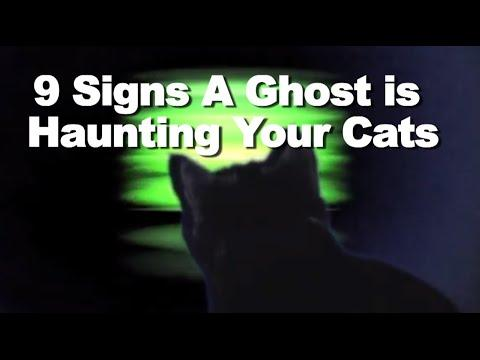 9 Signs A Ghost Is Haunting Your Cats