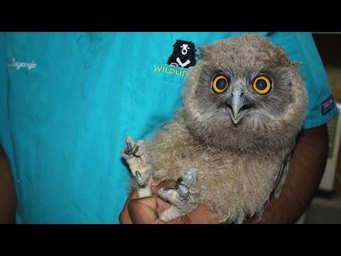 Super Cute Owl Rescued From 'Black Magic' Poachers