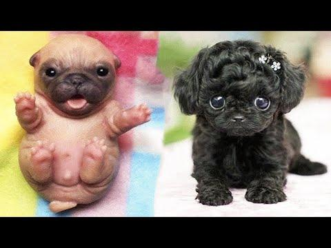 Cutest baby animals Videos Compilation Cute moment of the Animals - Cutest Animals #27