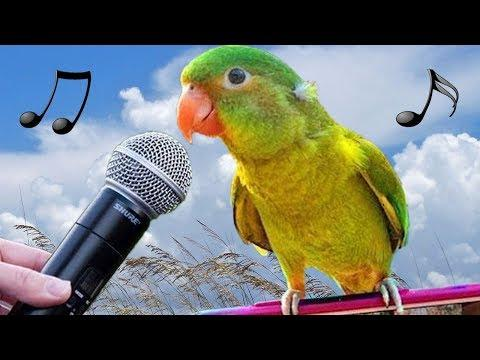 Funny Birds Imitate Phone Gun Alarm Cat Dog