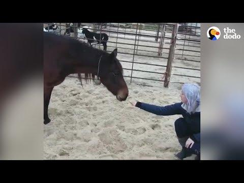 Horse Finally Finds A Home After Waiting For Over 5 Years | The Dodo