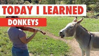 Today I Learned: Donkeys