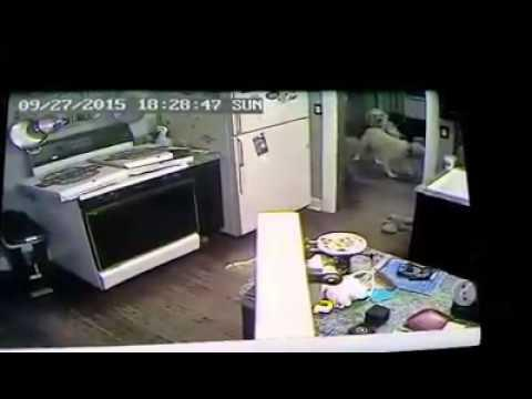 Dog Sets Stove On Fire After Stealing Pizza