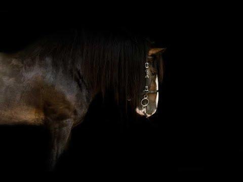 Myself [Equestrian Music Video]