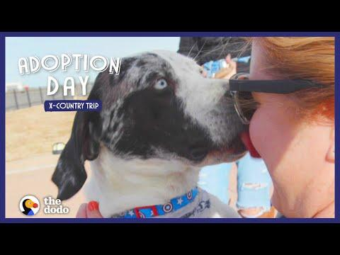 Watch This Kid Help A Shelter Dog Find The Perfect Home | The Dodo Adoption Day