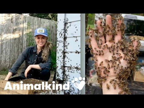 Beekeeper rescues bees with her bare hands   Animalkind #Video