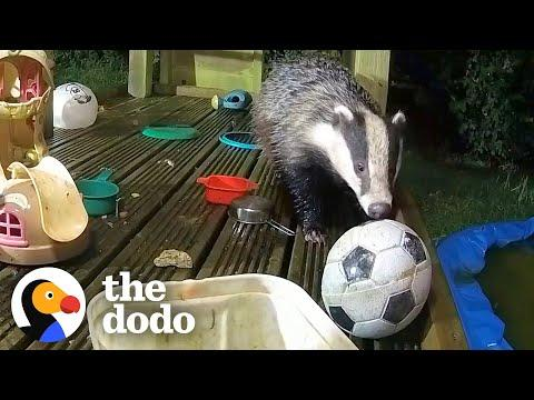 Guy Builds His Kids A Playground Video — And Wild Animals Move In
