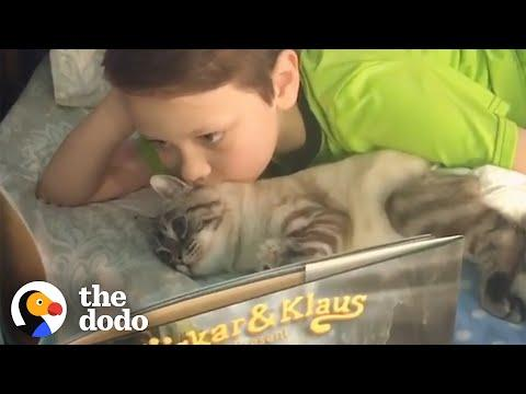 Little Boy Reads Books To The Cat His Family Rescued. Video.