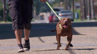 Waiting for a Forever Home: Mr. Wags | Pit Bulls & Parolees