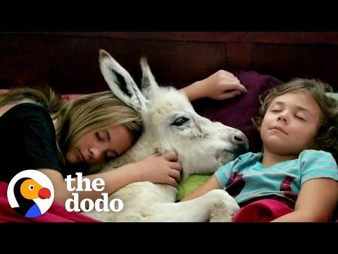 Sisters Have A Sleepover With... Their Tiny Baby Donkey? #Video
