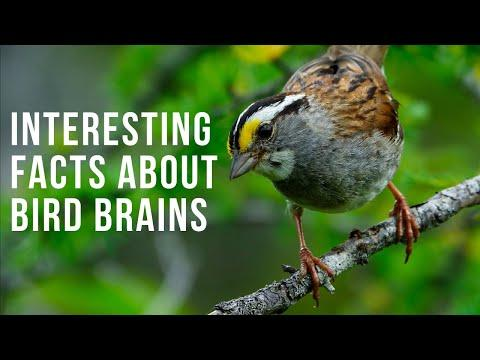 Interesting Facts About Bird Brains Video