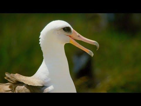 This 67 Year Old Bird Could Be The Oldest In The World | BBC Earth