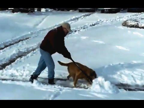 Dogs 'Helping' Their Owners To Shovel Snow Compilation