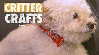 Doggy Bow Ties | Critter Crafts