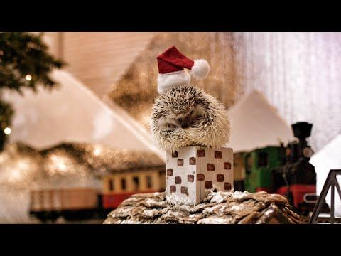 Hedgehog Christmas! In 4K!